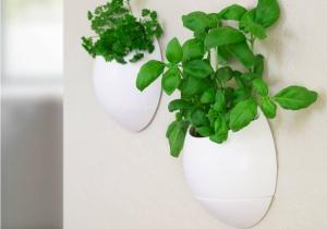 Set EcoPod  -- Gradina lui Semiramis la tine acasa.