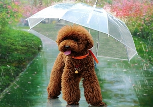 Pet Umbrella -- Si cainii au umbrele!