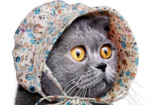Boneta de Pisica -- Purrrrrrfectiune absoluta