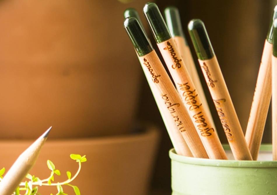 Sprout Sun Edition -- 3 Creioane in cutiute Limited Edition