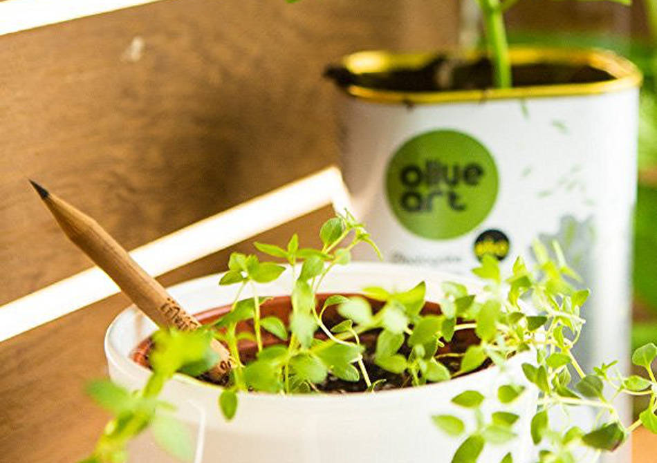 Sprout Herb Edition -- 3 Creioane in cutiute Limited Edition