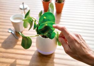 Ghiveci touch cu boxa - Da-le plantelor o voce!