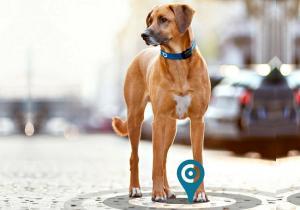 GPS Tractive 2.0 -- Tracker animale cu monitorizarea activitatii