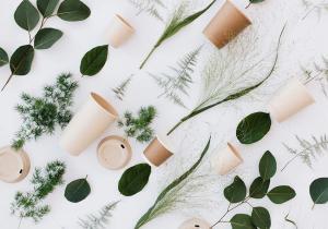 Pahare BIOdeck -- Facute din plante