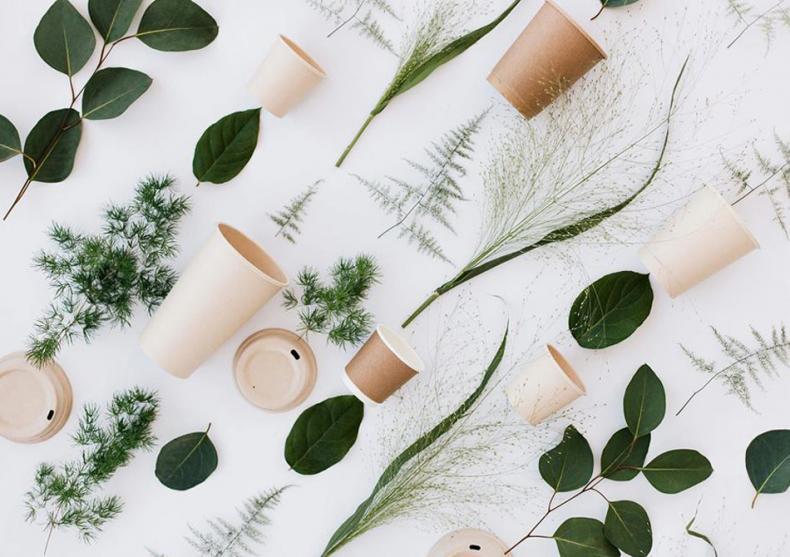 Pahare BIOdeck -- Facute din plante image