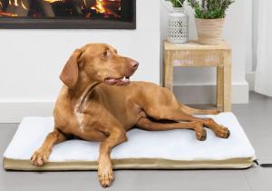 Culcus incalzit DOG -- Pat de 4 stele