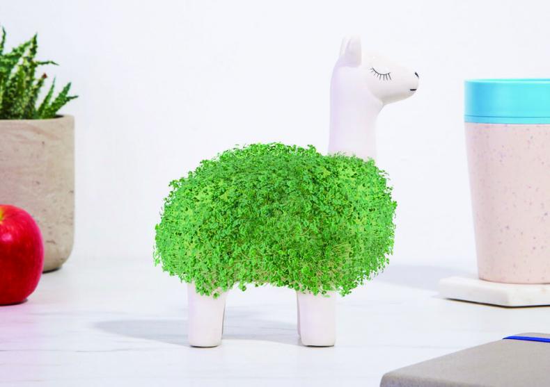 Llama chia -- imbrac-o in Verde image