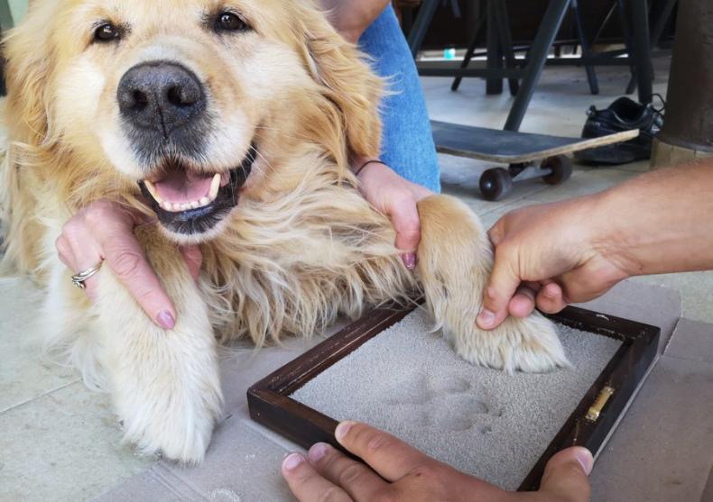 Kit amprenta Pets -- iubire la prima labuta image